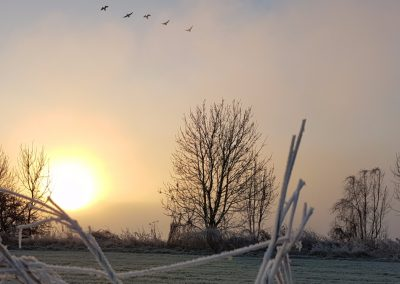 Zonsopkomst in mist 29 december 2016 - 3
